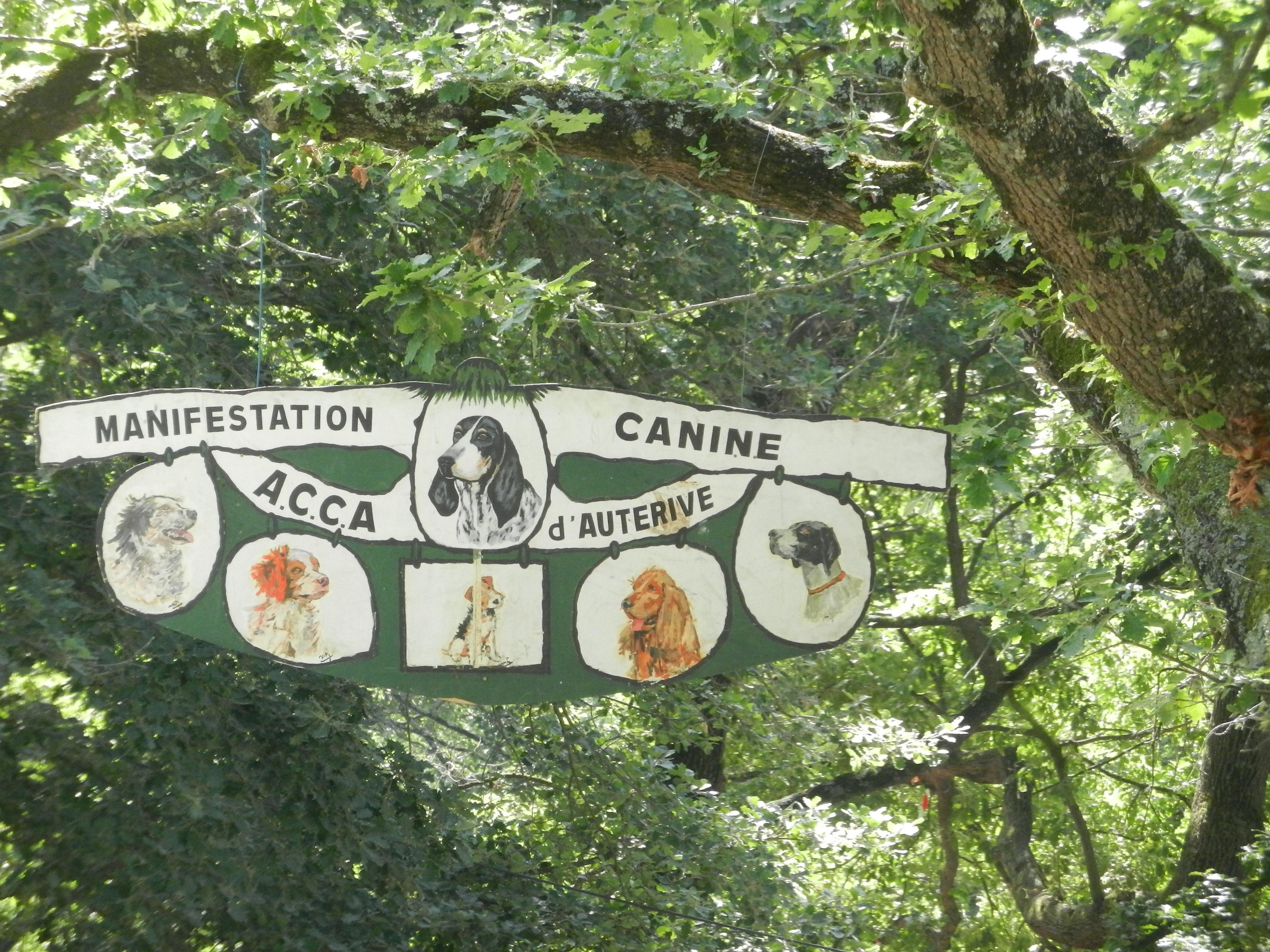 Dimanche, la fête du chien et de la chasse au bois Notre Dame